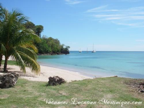 Plage paradisiaque, eau transparente, eau chaude, palmiers à 2 minutes à pieds de la villa (Anse Tonnoir)